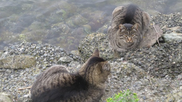 Harbor Cats