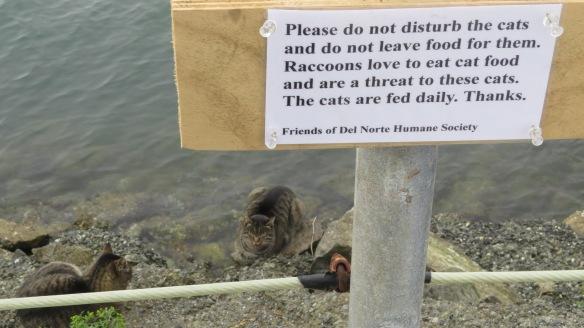 Harbor cats